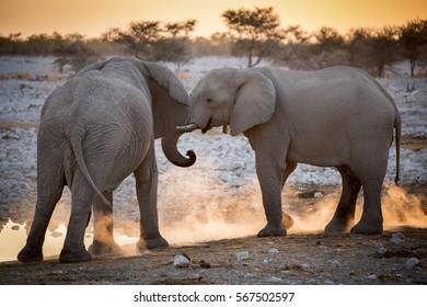 Elephants playing near a waterhole