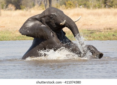 Elephants playing in the river as one jumped on the other's back while it is totally submerged.