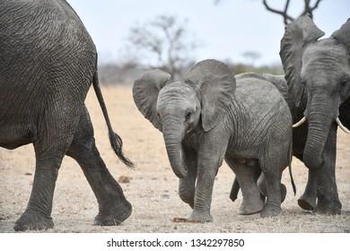 Elephants (s) at a waterhole