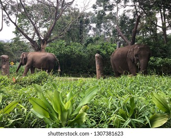 Elephants in Safari Garden Indonesia