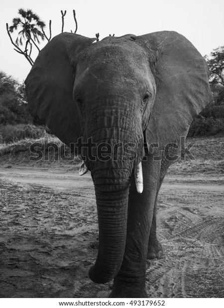 elephants in Samburu National Park, Kenya Africa