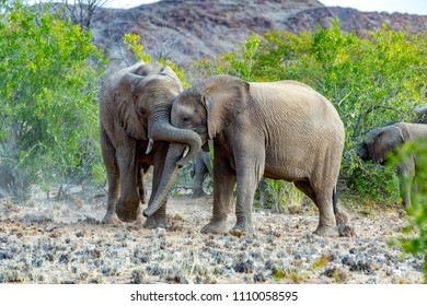 elephants in the savannah of the Etosha national park in Namibia