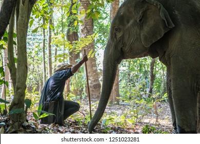Elephants set free in wild by Elephant nature park sanctuary