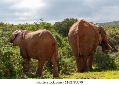 Elephants standing and eating branches in the field