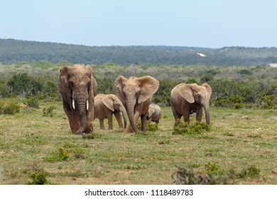 Elephants standing and scratching in the ground with their trunks