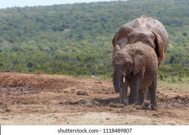 Elephants standing together in the pile of mud in the field