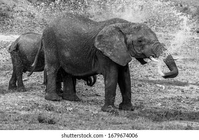 Elephants taking a shower Tanzania