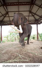 Elephants in Thailand Big Elephants Zoo