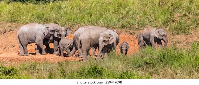 Elephants in Thailand, Khao Yai National Park.