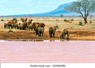 Elephants Tsavo East National Park in Kenya