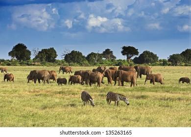 Elephants in Tsavo East Park 05