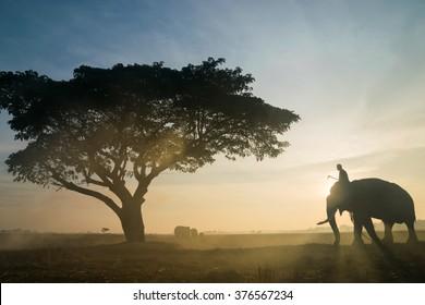 Elephants under the tree during sunrise.