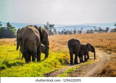 elephants walking next to a dirt road