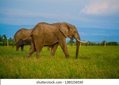Elephants walking on green grass  and blue skies