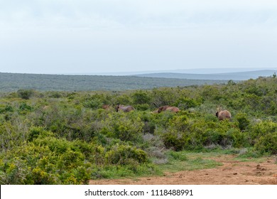 Elephants walking together into the bushes