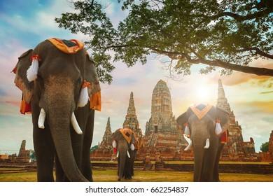 Elephants at Wat Chaiwatthanaram temple in Ayuthaya Historical Park, a UNESCO world heritage site, Thailand
