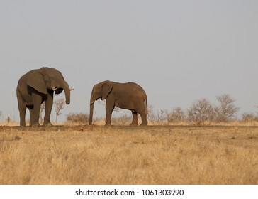 Elephants at water hole in Kruger National Park, South Africa