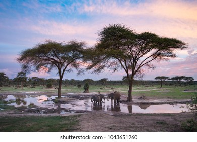 Elephants at a water hole at sunset.