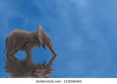 elephants in water with reflection