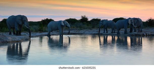 Elephants at waterhole in Nxai Pan