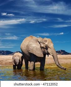 Elephants at watering in african savanna