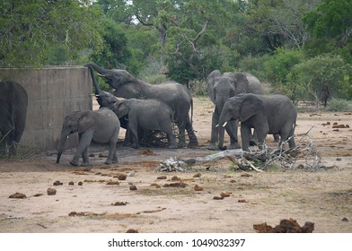 Elephants at Watering Hole at Kruger National Park in South Africa