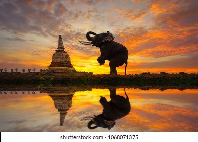 Elephants are worshiping the ancient pagoda at Ayutthaya in Thailand.