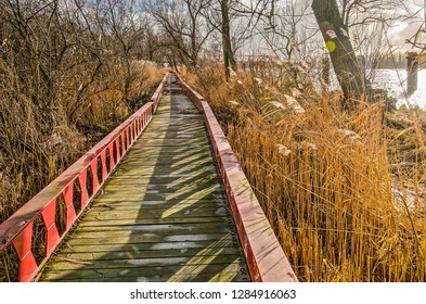 Elevated footpath made of steel beams and wooden planks in between reeds, trees and bushes on a tidel floodplain of the river Oude Maas in Ruigeplaatbos nature reserve near Hoogvliet, The Netherlands