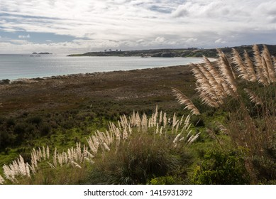 Elevated view of the bay at Karikari Moana from the vegetation-covered dunes, with seed plumes of toitoi, or plumed tussock grass, in the foreground. Karekare Peninsula, Northland, New Zealand.