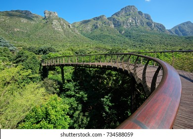Elevated walkway in the Kirstenbosch botanical gardens, Cape Town, South Africa
