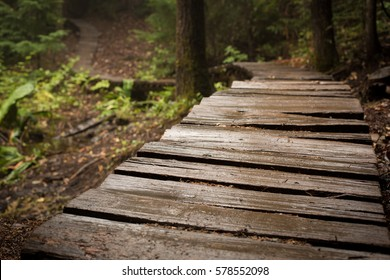 Elevated wooden pathway curving through wooded forest environment