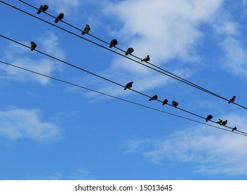 Groovy Birds On A Telephone Wire Images Stock Photos Vectors Shutterstock Wiring 101 Capemaxxcnl