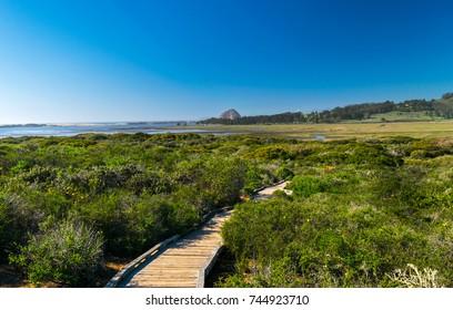 Elfin Forest in Los Osos, Morro Bay State Marine Reserve, Morro Bay, San Luis Obispo County Parks, California, USA