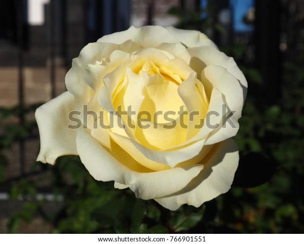 elina flower