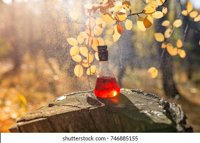 Elixir of love in a glass bottle. The life-giving water in the vial. Red drink for health. Autumn mood. Rainy forest.
