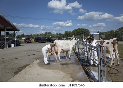 ELIZABETHTOWN, PA, USA-AUGUST 28, 2015:  Young people washing their milk cows at the local country fair prior to showing their animals for judging.
