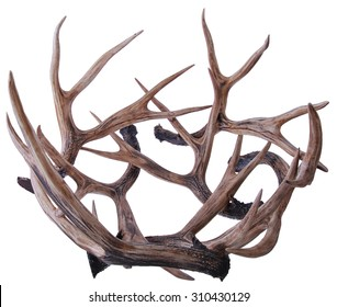 Asian medicine elk antler
