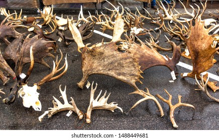 Elk and Moose antler's auction at the 2013 ELKFEST in Jackson Hole, Wyoming. 13 May, 2013.