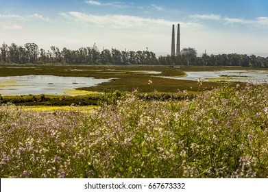 Elkhorn Slough Reserve, Monterey Bay, California. The 1700-acre Reserve hosts programs that promote education, research, and conservation in Elkhorn Slough. Moss Landing smoke stacks border the site.