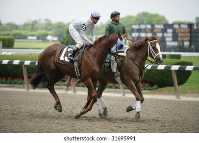 ELMONT - JUNE 6: Hangingbyathread with Eibar Coa aboard in the post parade for the Fifth race at Belmont Park on Belmont Stakes Day - June 6, 2009 in Elmont, NY.