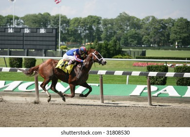 ELMONT - JUNE 6: Munnings with John Velazquez aboard leads in the Stretch Run of The Woody Stephens Grade II Stakes at Belmont Park on Belmont Stakes Day - June 6, 2009 in Elmont, NY.