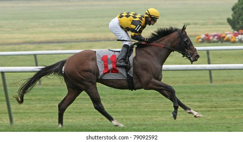 "ELMONT, NY - JUN 11: Jockey David Cohen races ""Power Dreams"" to victory in a turf allowance race at Belmont Park on Jun 11, 2011 in Elmont, NY."