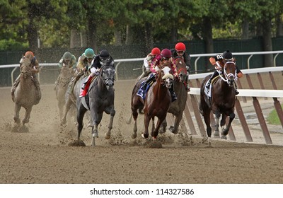 """ELMONT, NY - SEPT 29: The field for The Vosburgh Invitational turns for home at Belmont Park in Elmont, NY on Sept 29, 2012. Eventual winner is """"The Lumber Guy"""" (gray roan at left)."""