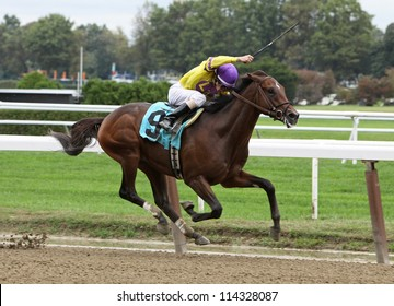 ELMONT, NY - SEPT 29: Jockey Ramon Dominguez guides Stormy Len to his first win at Belmont Park in Elmont, NY on Sept 29, 2012.