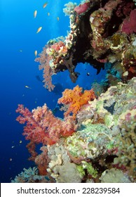 Elphinstone reef wall, soft corals, divers and anthias