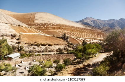 Elqui Valley. North of Chile