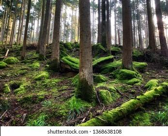 The Elven Place - Mount Sainte- Odile - Alsace
