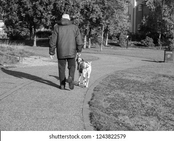 ELY, UK - CIRCA OCTOBER 2018: Man walking Dalmatian dog in public park in black and white