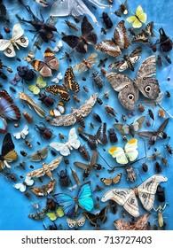 Embalmed butterflies behind a museum window