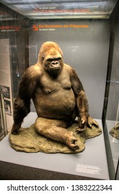 An embalmed gorilla at the Natural History Museum (Museum für Naturkunde) in Berlin, Germany - 20/04/2019